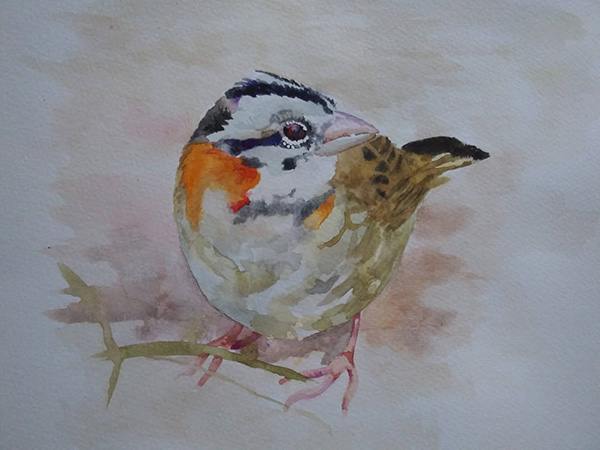 Ria Unson bird study