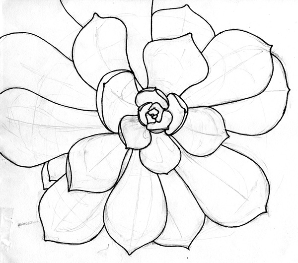 succulent ink drawing